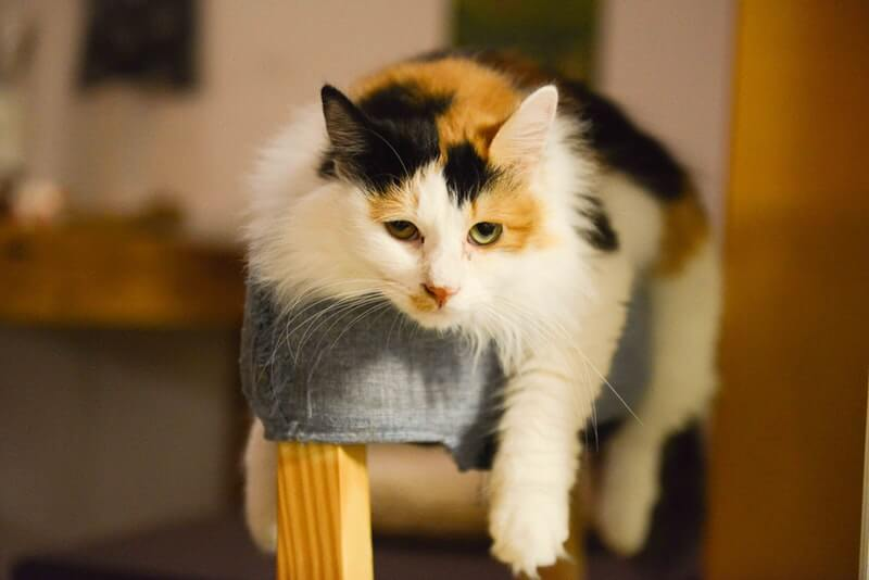 5 Signs Your Cat Is Bored Out of Their Mind & How You Can Help | Meows 'n'  Paws