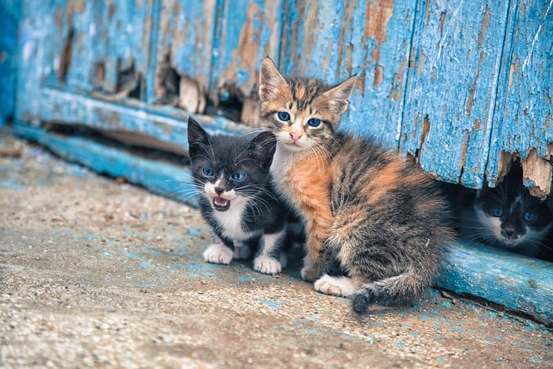 How to take care of stray and feral cats