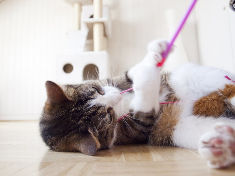 Cat toys to entertain your cat