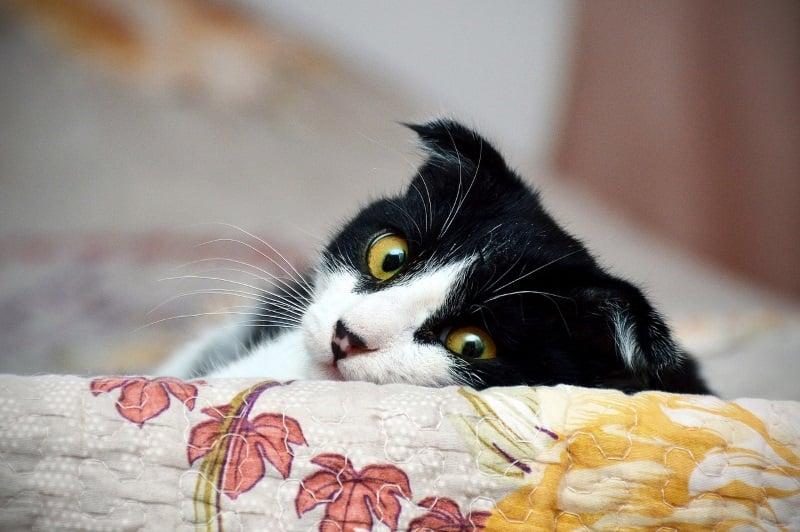 11 reasons why cats make good pets