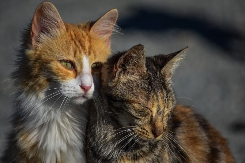 How to help and take care of stray and feral cats