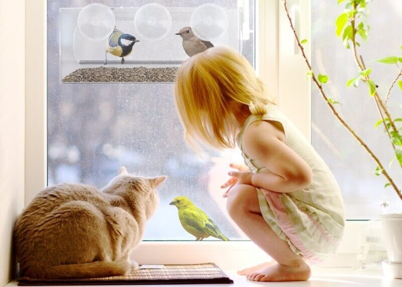 Window bird feeder for cats to watch