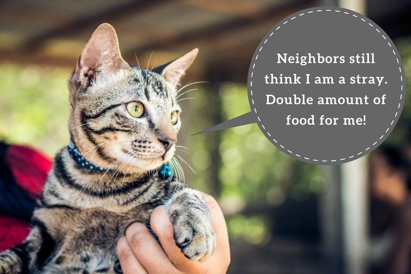 What to do if your neighbor is feeding your cat