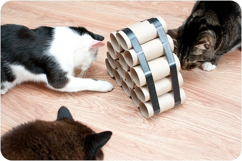 Easy cat toy made of toilet rolls