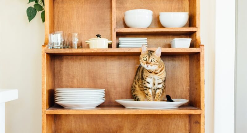 Furniture the cats love: Bookshelves and open china closets