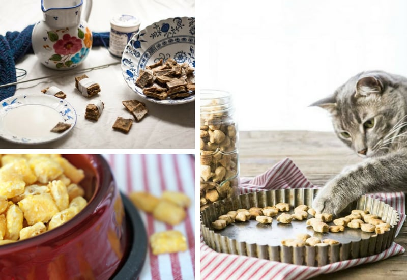 DIY Cat Treat Recipes from Various Bloggers