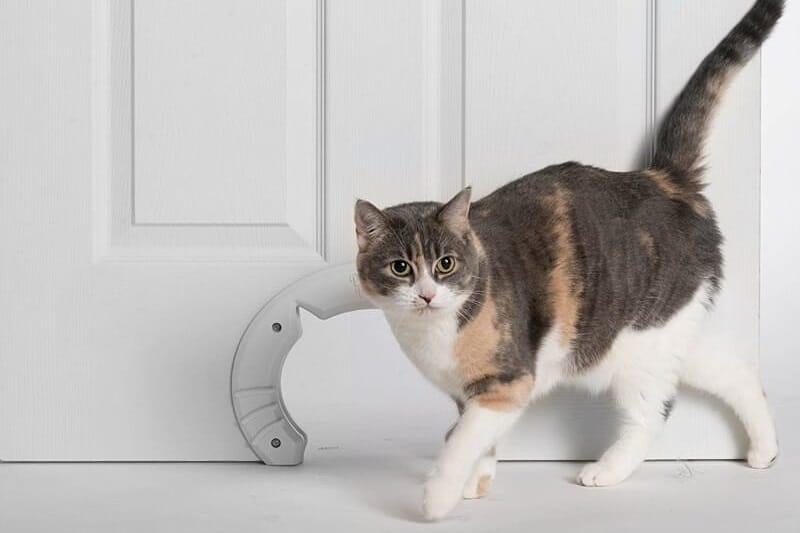 Furniture for cats: interior kitty doors