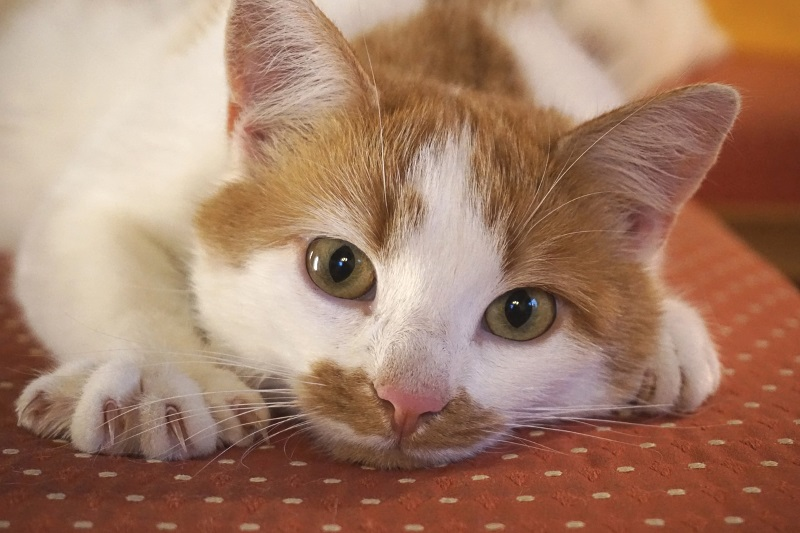 9 reasons why declawing is bad