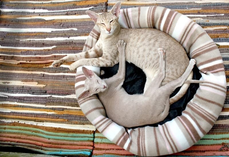 Cat stuff to make them happy: Cat bed